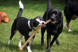 lucy pet carer dog boarding.jpg
