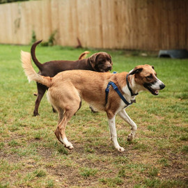 prevent boredom and anxiety in dogs acti