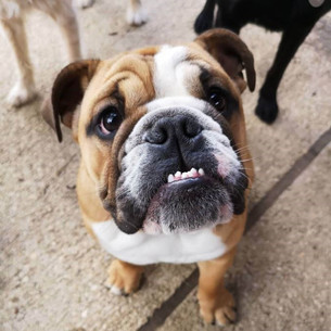 small-dog-boarding-wiltshire-6.jpg