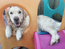 lucy pet carer doggy day care creche pla