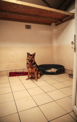 doggy day care luxury boarding kennels s