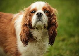 doggy-day-care-swindon-19.jpg