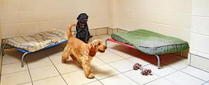 dog boarding kennels.jpg