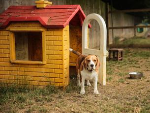 doggy-day-care-swindon-6.jpg