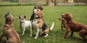 doggy-day-care-swindon-8.jpg