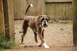 doggy-day-care-22.jpg