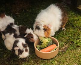 pet-sitters-4.jpg