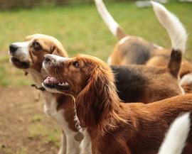 lucy pet carer dog boarding and behaviou