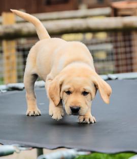 puppy-day-care.jpg