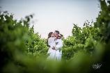photographe de Mariage, Mariage en Provence, photo dans les vignes