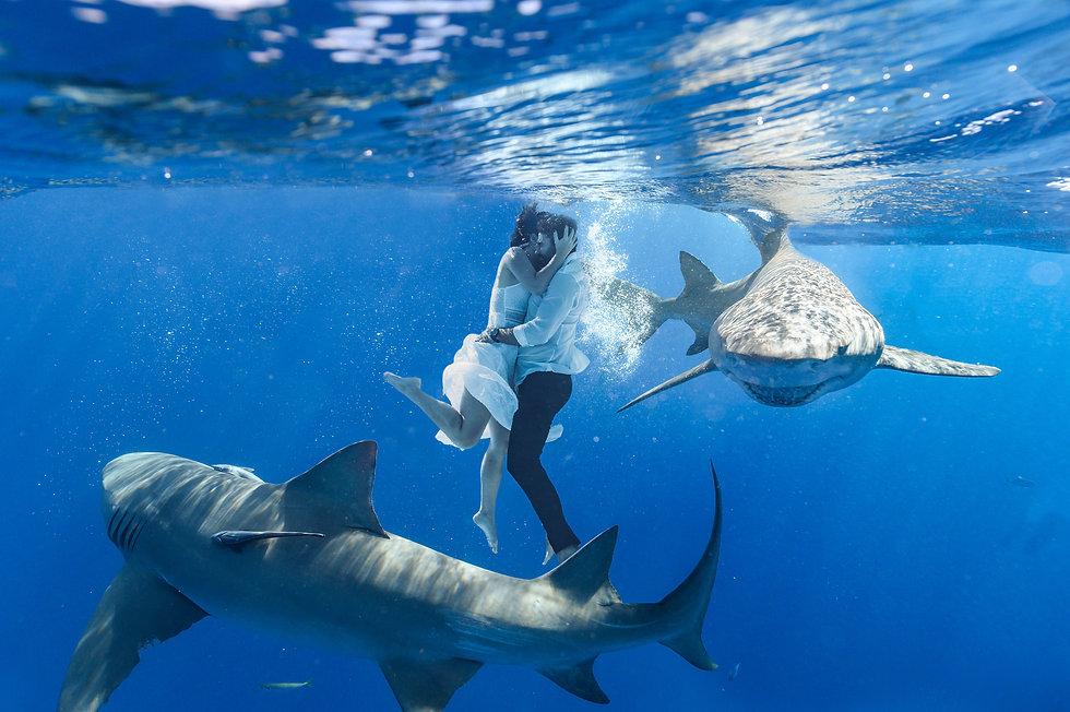 photographe de mariage avec les requins . Photo extraordinaire avec un couple et des requins