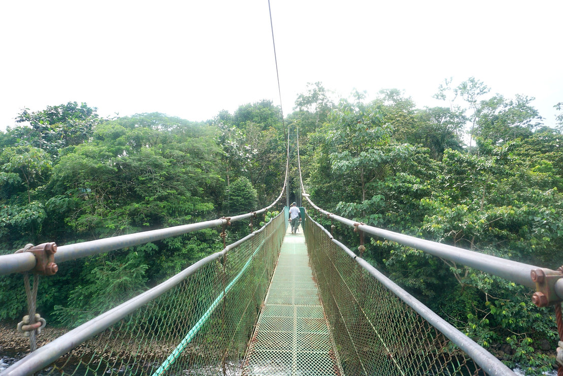 Suspension bridge in Costa Rican rainforest