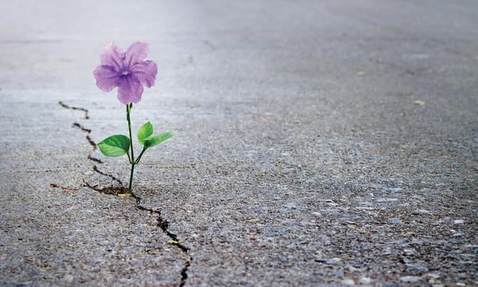 Como ser resiliente neste momento de crise