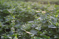 Fertility, Cover Crops, and Soil Testing