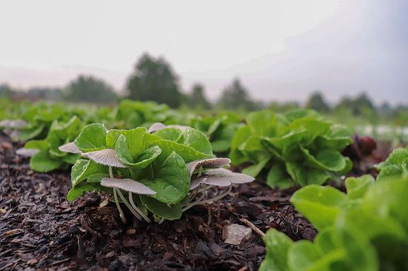 Organic No-Till Market Farming