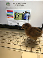 Virtual Farmer Call-In: COVID-19:  Food Safety, Agribusiness Updates, Two OAK Farmer Adaptations