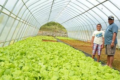 Organic Greenhouse Farming Comes to Palau