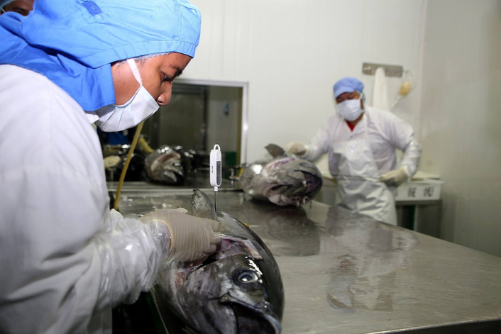 United States seeks increase in its tuna catch limit