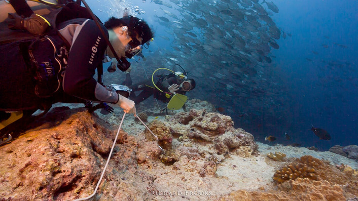 Palau bags top award in Japan diving fair