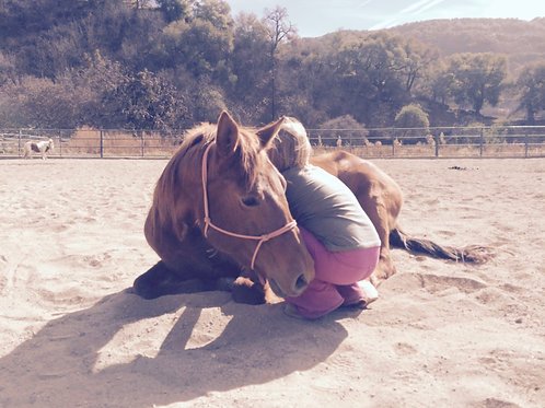 From The Ground Up (Horsemanship)