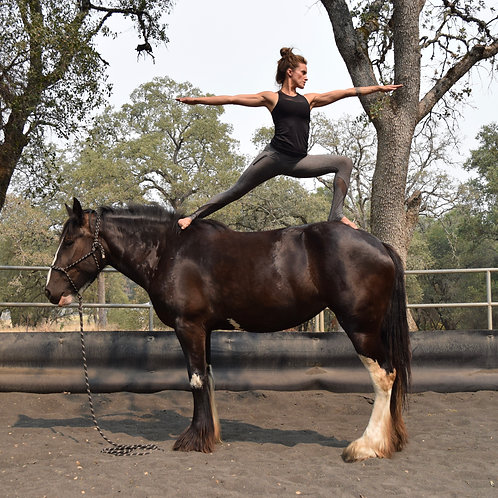 Introductory Horse Yoga Workshop