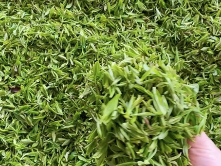 How Much Green Tea Should We take to lose weight?