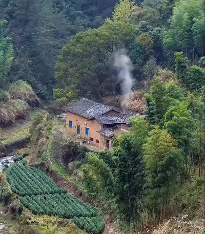 Where the Best Green Tea Grown