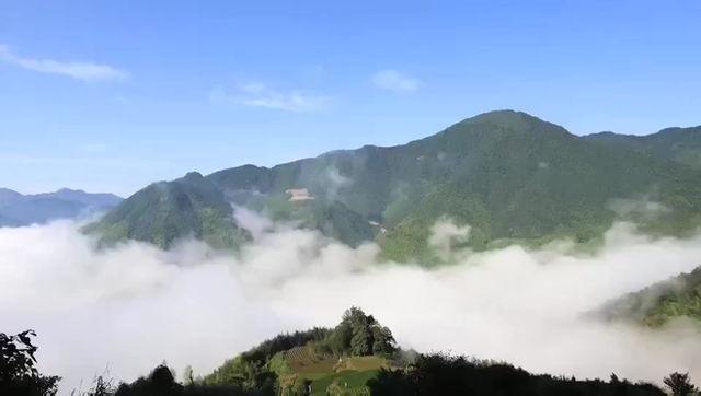 Where Tai Chi Green Tea is Grown -- Yingshan, Hubei