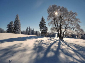 hiver au soleil.jpg