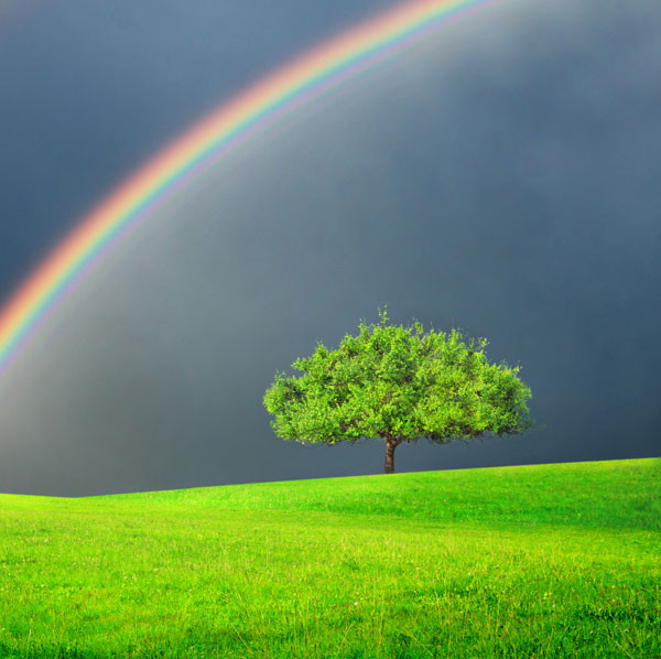 Regenbogen baum.jpg