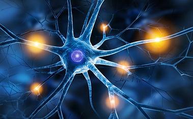 Neurone schmerz.jpg
