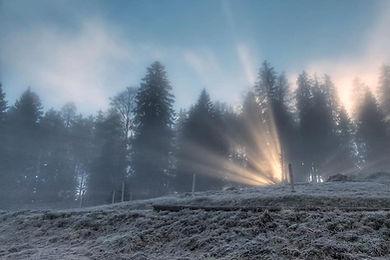 hiver_lumière_sapin.jpg