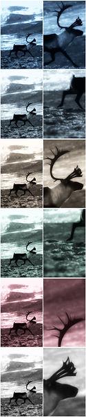 Reindeer at Hardangervidda COLLECTION ver5