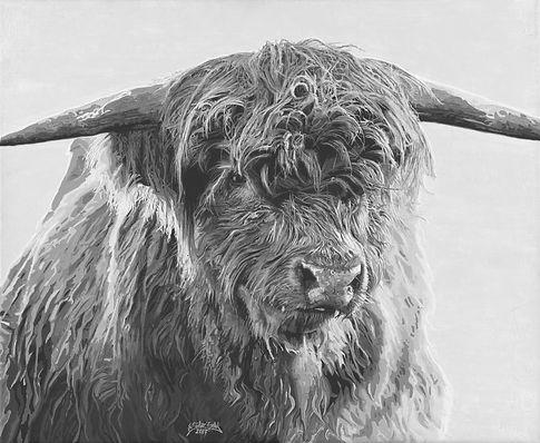 Highland Cattle 2017 _ 72dpi _ 1080x887