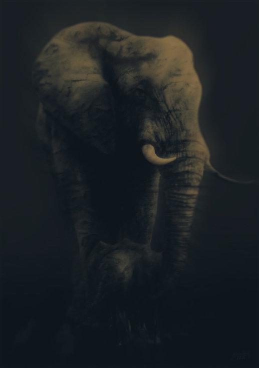 Elephant and Baby v7 2018 _ 72dpi _ 1080