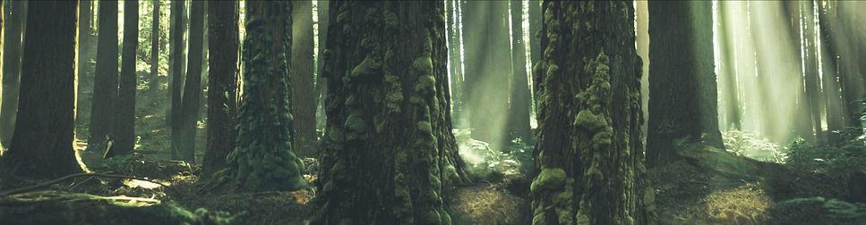 Old Forest 2019 v12b _ 72dpi 256sca _ 25