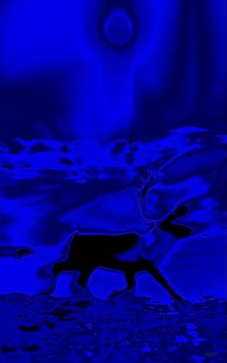 reindeer at hardangervidda v10 2018 _ 72