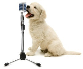dog in voice over session