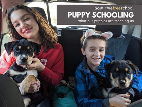 Puppy Schooling