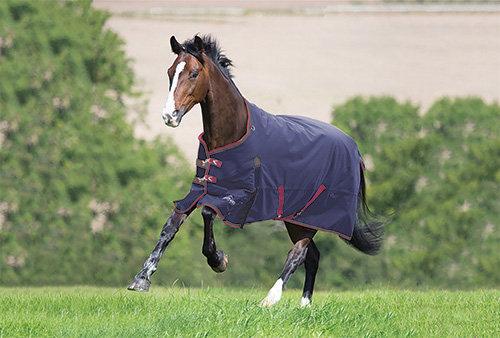 Highlander Plus Blanket 300gr Standard Neck