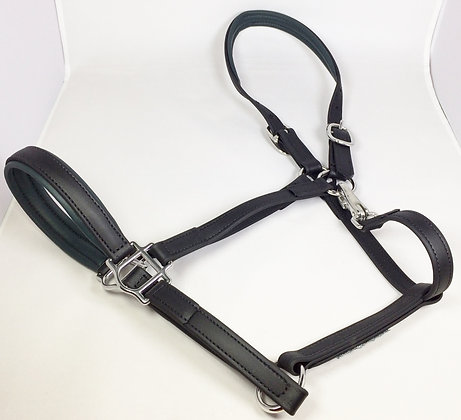 DIVINE EQUINE Black Beta Halter Padded inlay in Forest Green