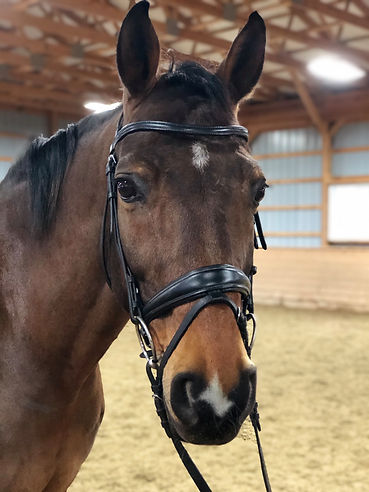 Custom made browband on horse.JPG