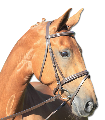 STAR Bridle Lifestyle