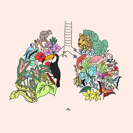 polmoni animali.jpg