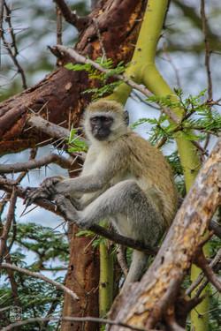 Tanzanie/Serengeti