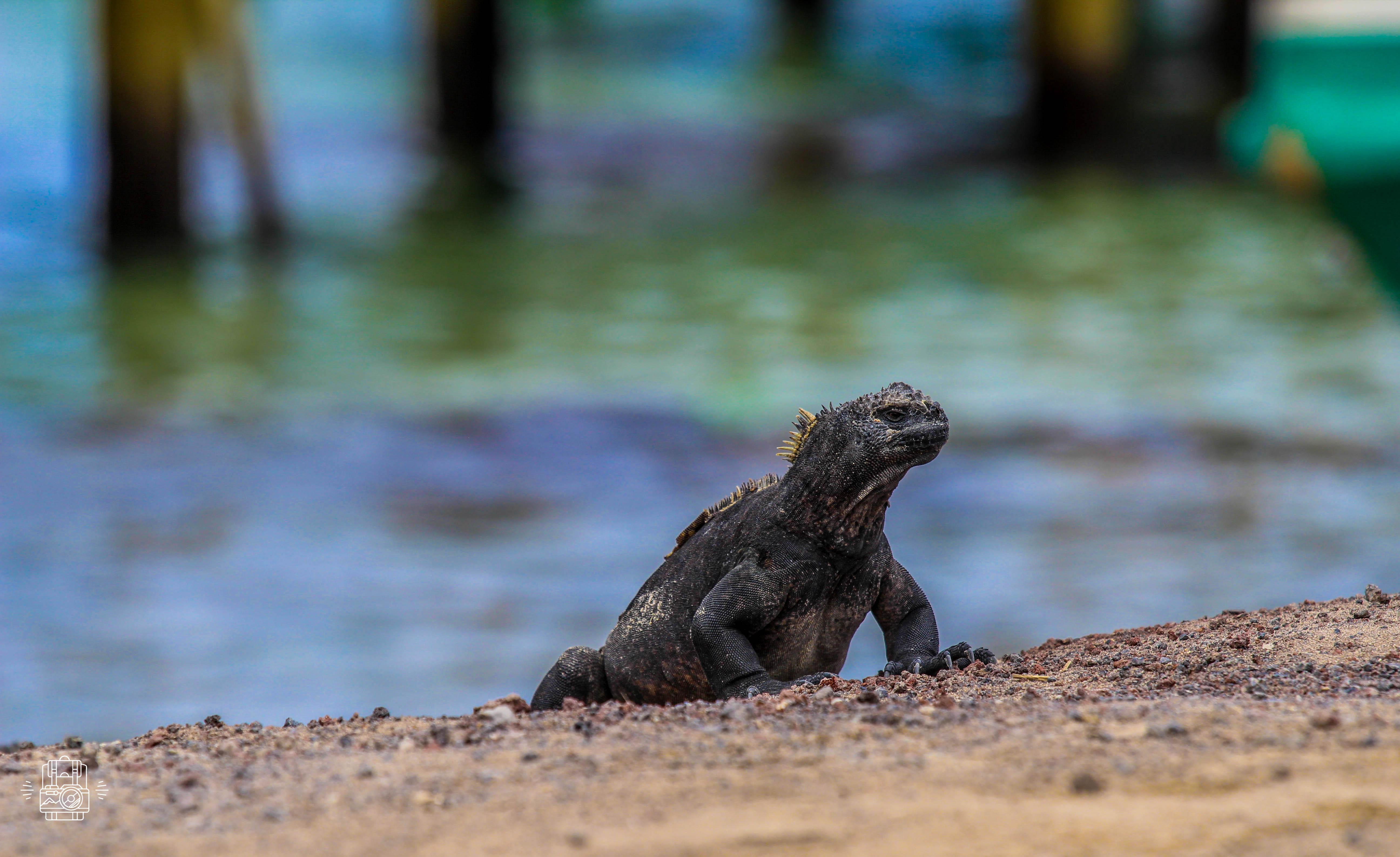 Equateur/Galapagos
