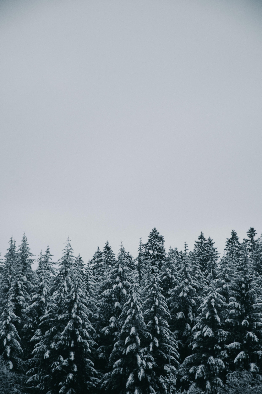 Belgique/Hautes Fagnes