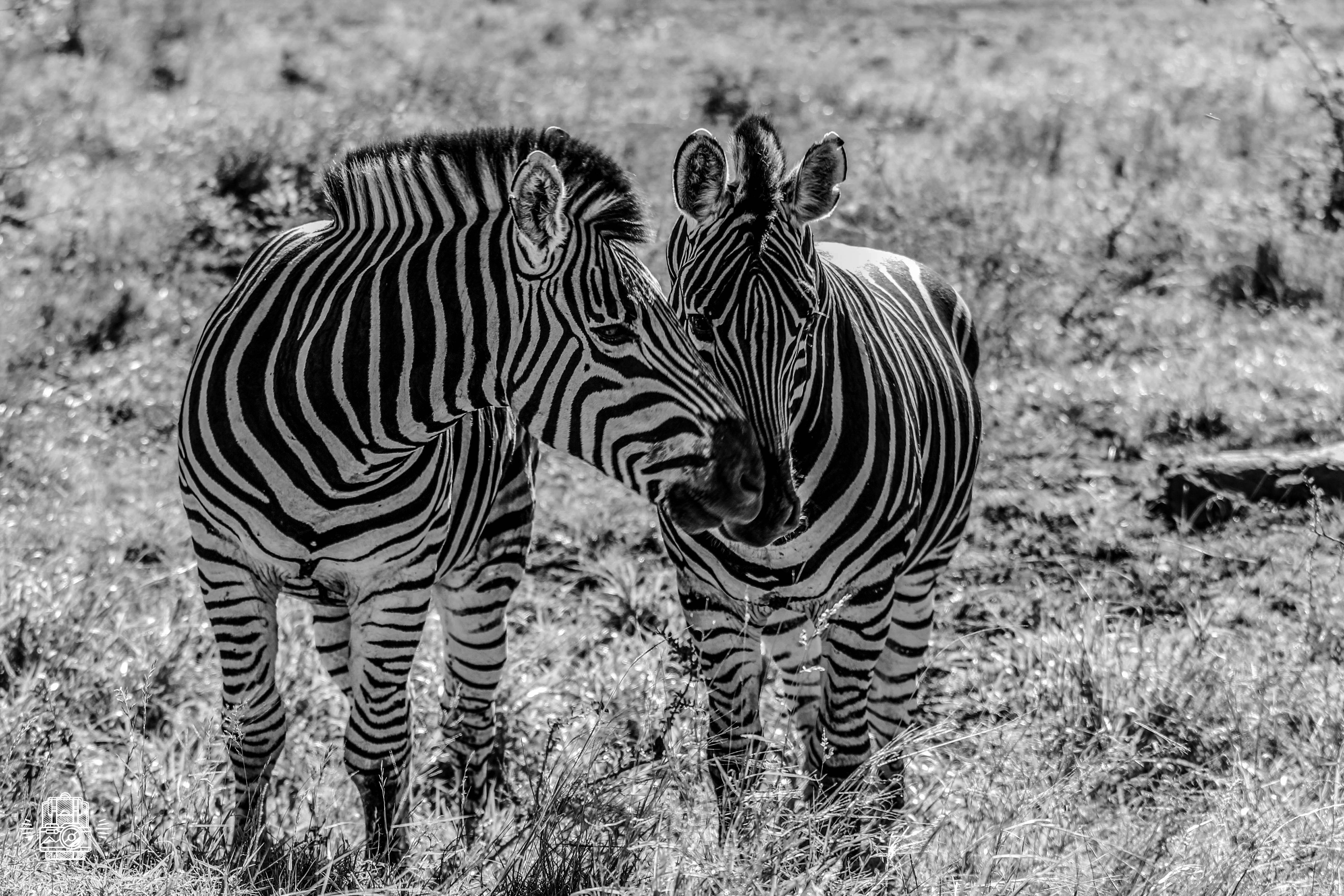 Afrique du Sud/Kruger