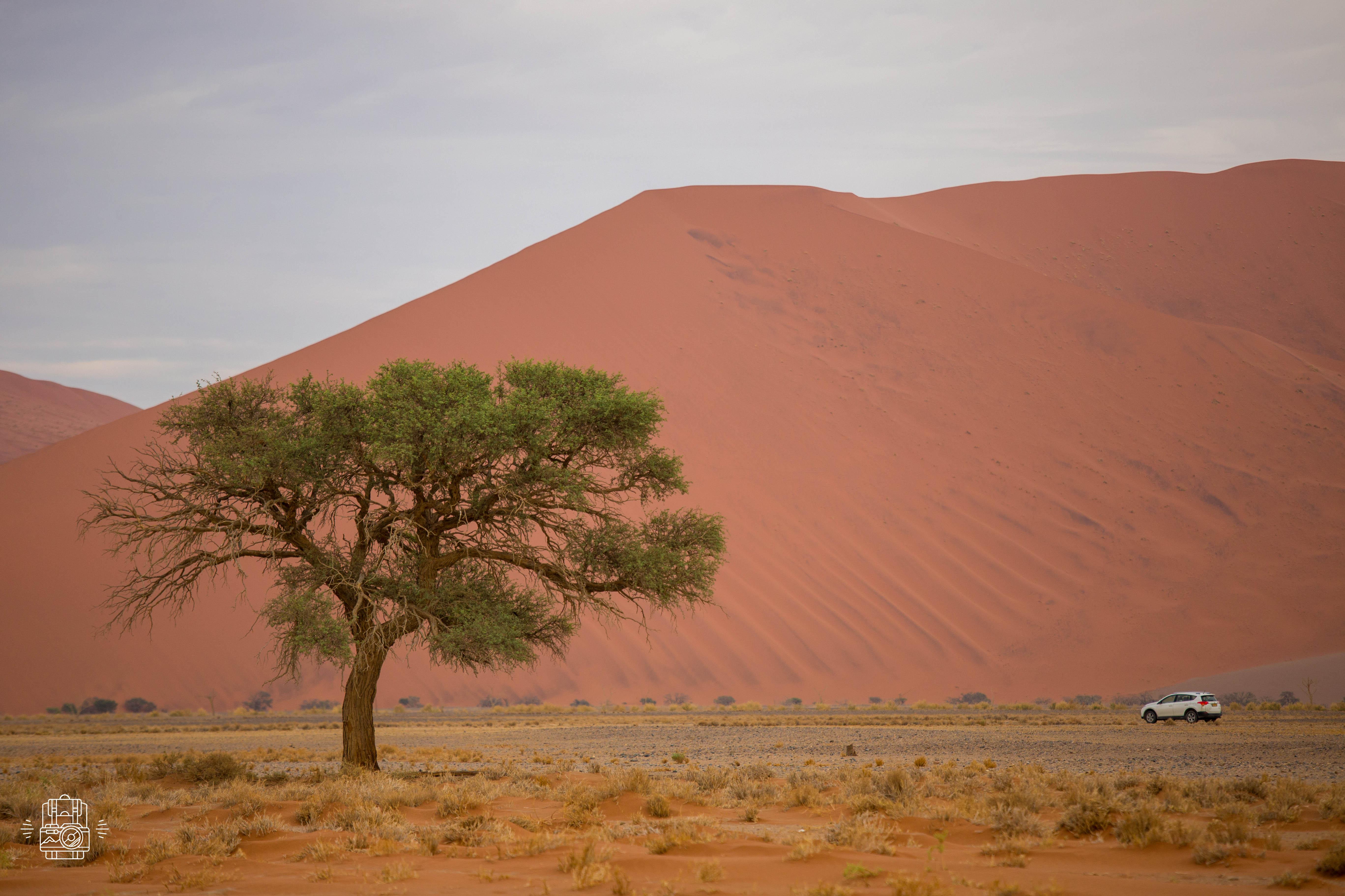 Namibie/Dune 45