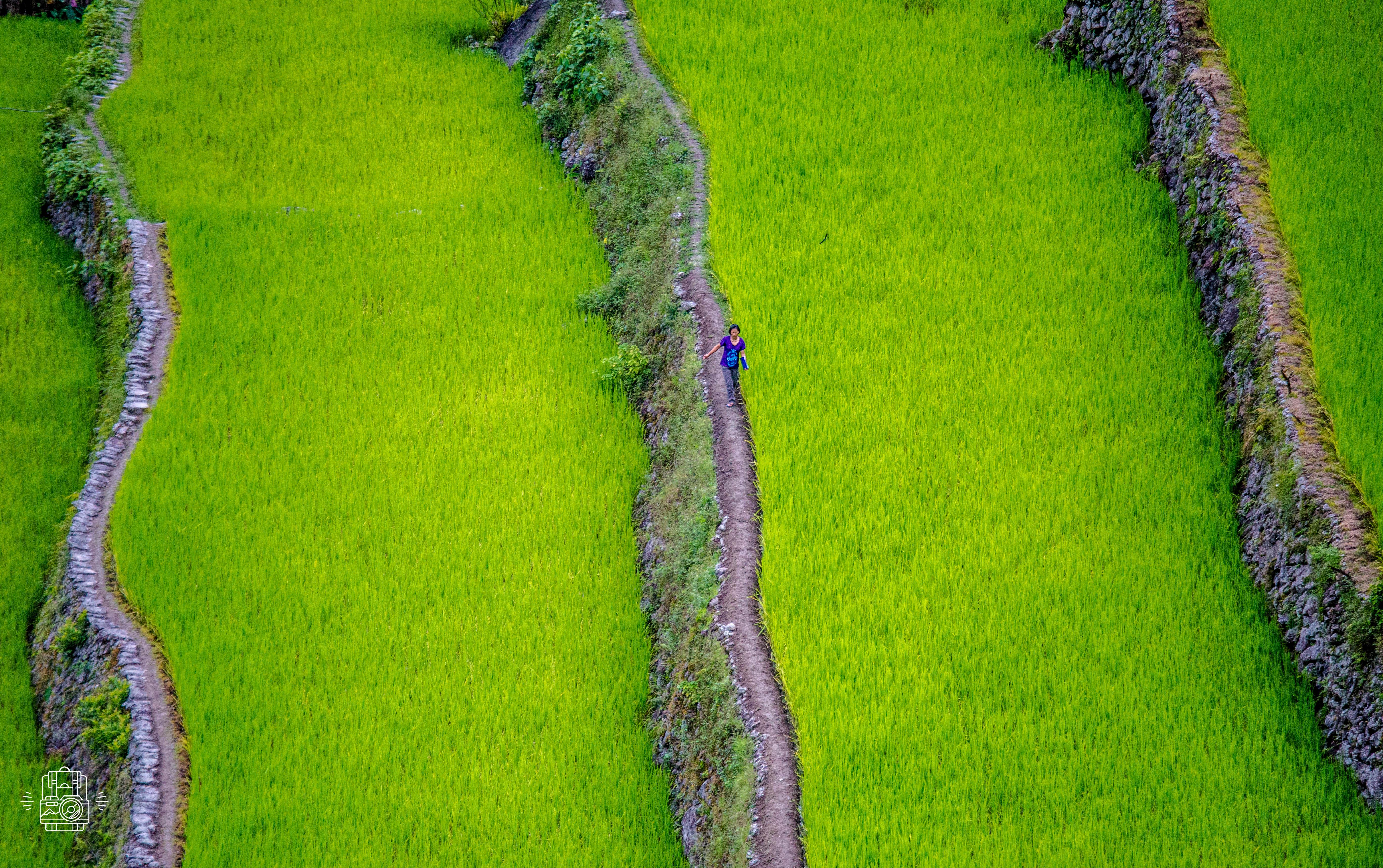 Philippines/Banaue